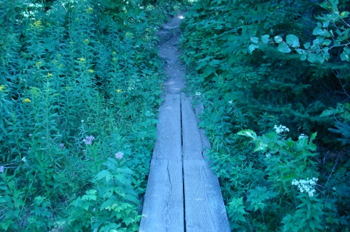 Swamp boardwalk on Isle Royale